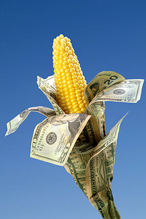 genetically modified seed